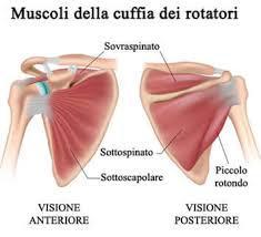 Esemplificazione dei muscoli della cuffia dei rotatori
