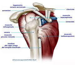 Visione laterale dell'articolazione